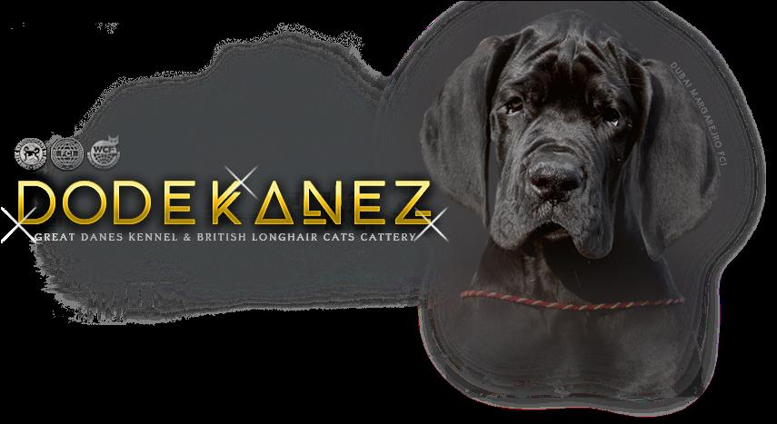 Download Hd Neapolitan Mastiff Transparent Png Image Nicepng Com