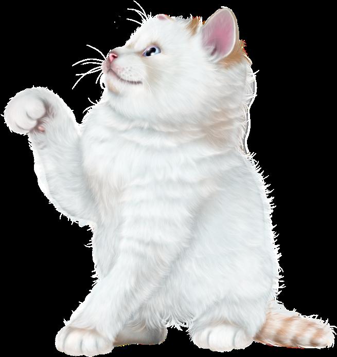 Puppy Images, Kitten Wallpaper